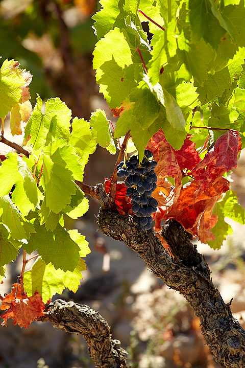 SPANISH VINEYARDS TOUR